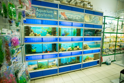 Рыбки в магазине Ле'муррр