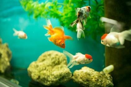 5 рыбок в магазине Ле'муррр